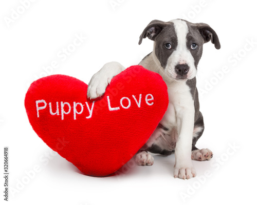 obraz PCV Puppy Love Valentines Day