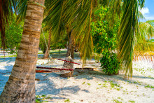Empty Hammock Between Palms Tr...