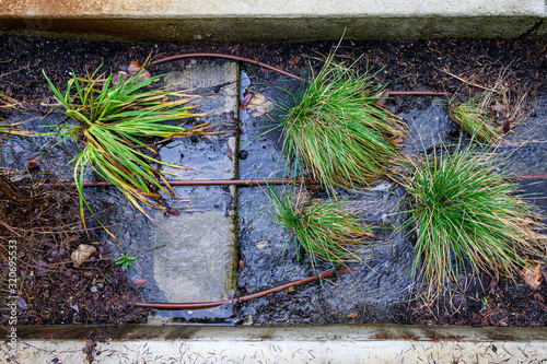 Photo Sidewalk planter with heavy rain runoff, irrigation hoses and green plants