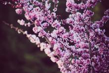 Beautiful Spring Flowers Bloom...