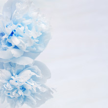 Fresh Blue Flowers Peonies, Greeting Card, Holiday Concept. Vertical Invitation For Event. Template For Holiday Greeting. Soft  Selective Focus.