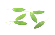 Sage Leaves Isolated On White ...