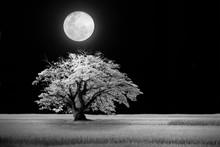 White Dream In The Black