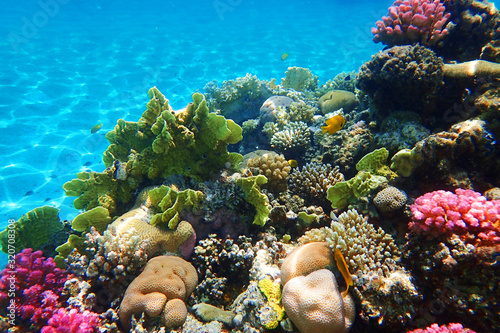 Canvastavla coral reef in Egypt
