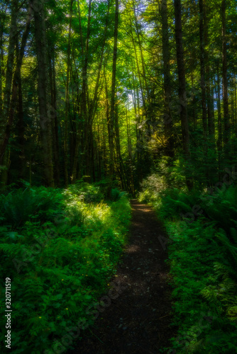 Forest Walking - Washington - Mountains - Beliingham Washington
