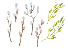 Easter Willow Set Watercolor. ...