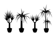 Collection Silhouette Yucca In...