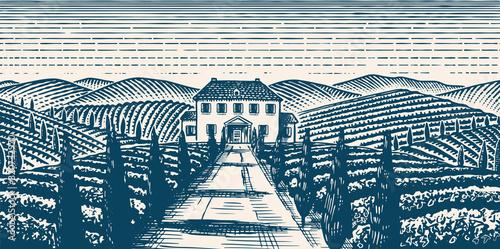 Valokuva Scenic view of vineyards