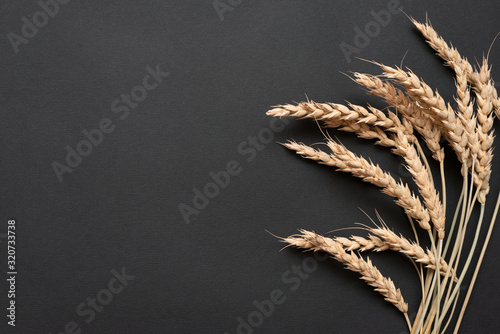 Fotografia Heap of wheat stems on black background with copy space.