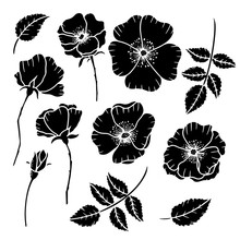 Hand Drawn Isolated Wild Rose ...