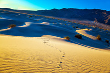The Chains Of Footprints In Th...