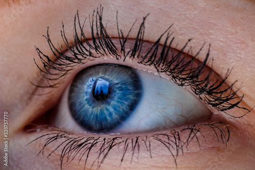 Photo Blue eye macro close up