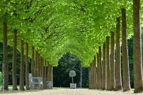 Photo Beautiful alley of trees in the form of a tunnel in a European garden in spring