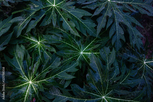 Top view leaf background Wallpaper Mural