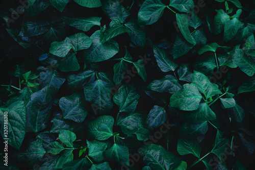 Top view leaf background Canvas Print