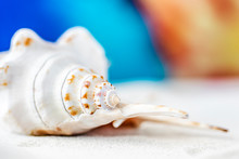 Colorful Sea Shells Photograph...