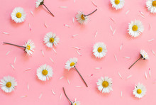 White Daisies On A Light Pink ...