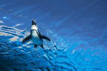Low Angle View Of Penguin Swim...