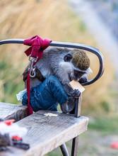 A Little  Monkey Dressed In A ...
