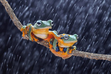 Frog, Frogs, Flying Frog, Tree...
