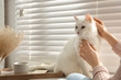 Young woman petting her beautiful white cat at home, closeup. Fluffy pet