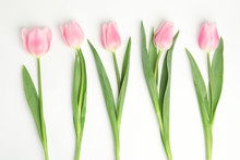 Beautiful Pink Spring Tulips On White Background, Top View