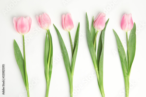 obraz PCV Beautiful pink spring tulips on white background, top view