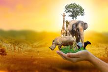 Wildlife Conservation Day Wild...