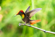 A Ruby Topaz Hummingbird With ...