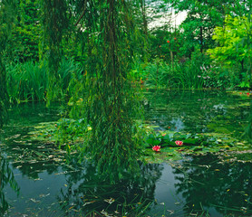 Fototapeta Do salonu The Lilypond with the flowering water lillies at Claude Monet's garden