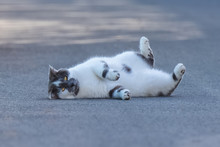 Cat That Rolls On The Floor An...