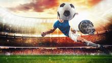 Soccer Striker Hits The Ball W...