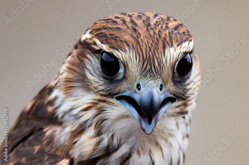 Raptor close-up Canvas Print