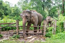Elephant Dans Forêt Tropicale