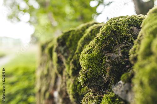 Fototapeta mousse plante pierre