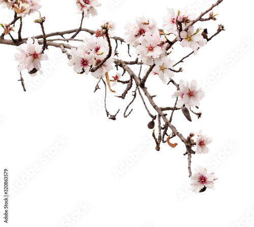 Photo Horticulture of Gran Canaria - almond blossoms