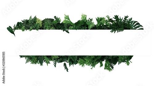 Green leaves nature frame layout of tropical plants bush  (ferns, climbing bird's nest fern, philodendrons, Monstera) foliage floral arrangement on white background with clipping path.