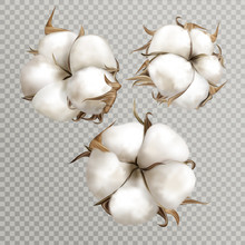 Realistic Cotton Branches With...