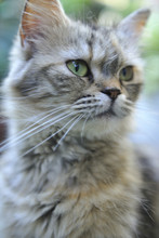 The Portrait Of Cat In Houtong...