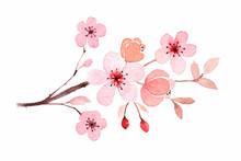 Cherry Blossom Branch In Water...