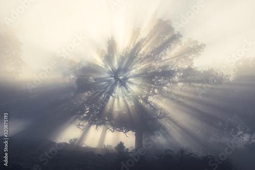 Photo Un rayo a través del bosque