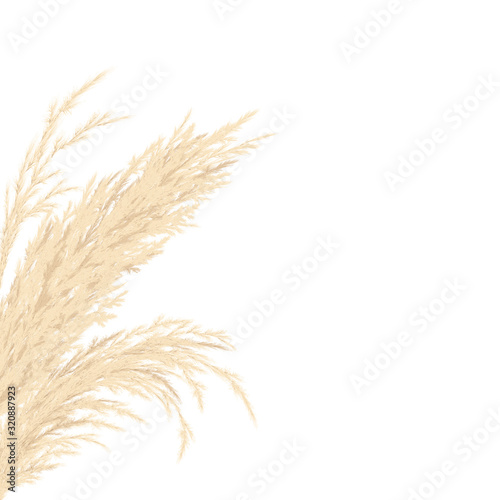 Silver golden Pampas grass Card template frame on the left with copy space Tablou Canvas