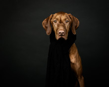 Dog With Scarf On Black Backgr...