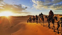 Camel Caravan In The Desert Sahara Morrocco