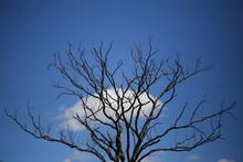 Galhos Secos De árvore Com Nu...