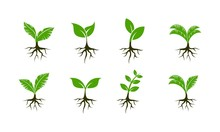 Plant Seed Set Template Vector...