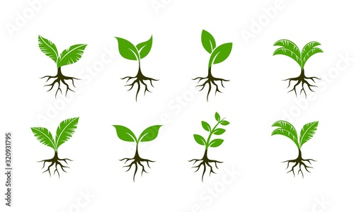 Plant seed set template vector icon Fotobehang