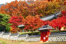 한국의 가을 Korean Autumn