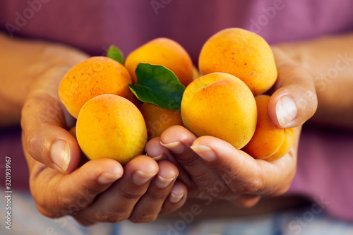 Photo Close up of woman with handful of fresh, organic apricots