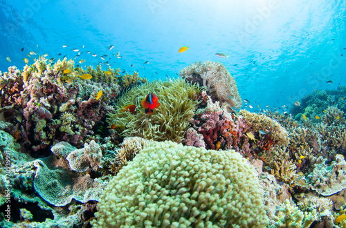 Cuadros en Lienzo coral reef with fish
